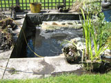 pond cleaning oxfordshire 5